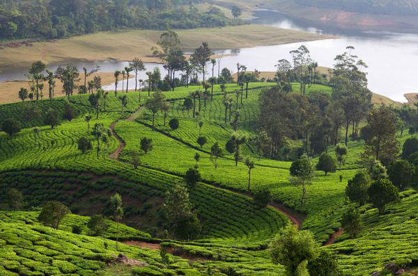 A-Tryst-With-Nature-Kerala-Tour-Package