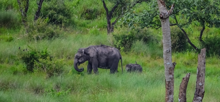 wayanad-elephants-750x350